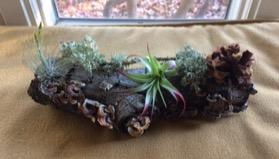 fairy logs